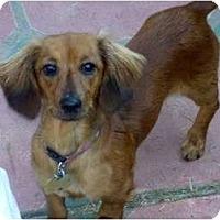 Adopt A Pet :: Roxanne - San Jose, CA