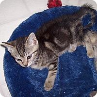 Adopt A Pet :: Page - Richmond, VA