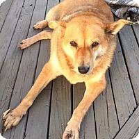 Adopt A Pet :: Lady - Cincinnati, OH