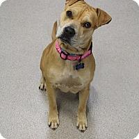 Adopt A Pet :: Molly - Manitowoc, WI