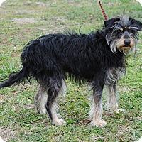 Adopt A Pet :: Evert - Parsons, KS