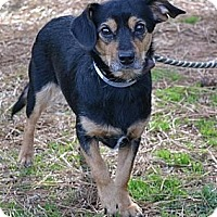 Adopt A Pet :: Moxie - Athens, GA