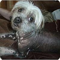 Adopt A Pet :: Otis (PA) - Gilford, NH