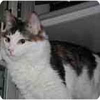 Adopt A Pet :: Anthony - Marietta, GA