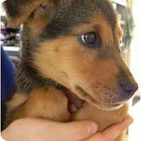 Adopt A Pet :: Adventurer - Alexandria, VA