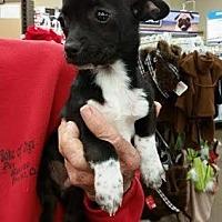 Adopt A Pet :: Jack - Fresno, CA
