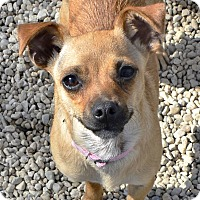 Adopt A Pet :: Spicy - Meridian, ID