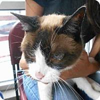 Adopt A Pet :: PRECIOUS - San Antonio, TX