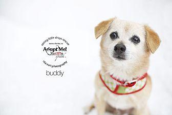 Pug/Chihuahua Mix Dog for adoption in Aqua Dulce, California - Buddy