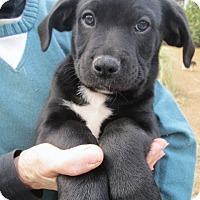 Adopt A Pet :: BERT - Brookside, NJ