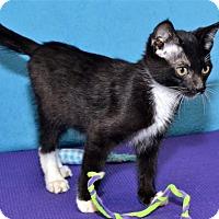 Adopt A Pet :: Leopold - Lenexa, KS