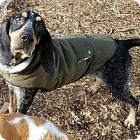 Adopt A Pet :: Sally Mae - Lexington, MA