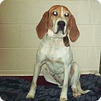 Adopt A Pet :: Jayne - Coeburn, VA