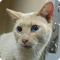 Adopt A Pet :: Peaches - Lincolnton, NC