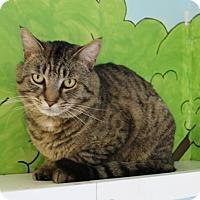 Adopt A Pet :: Boss  34037643 - Westampton, NJ