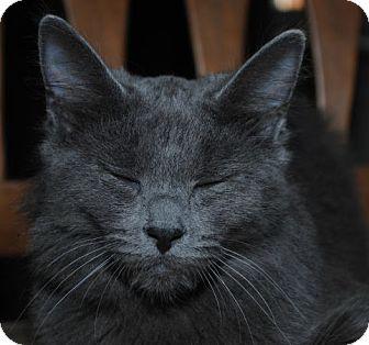 Domestic Mediumhair Kitten for adoption in Monroe, North Carolina - Hailey