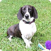 Adopt A Pet :: JilliBean - Mocksville, NC