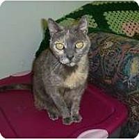Adopt A Pet :: Pineapple - Hamburg, NY