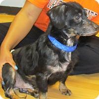 Adopt A Pet :: Kiefer - Chesterfield, VA