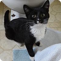 Adopt A Pet :: JINGLE - Diamond Bar, CA