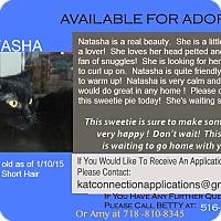 Adopt A Pet :: Natasha - East Meadow, NY