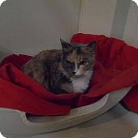 Adopt A Pet :: Dreamy - Colbert, GA