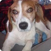Adopt A Pet :: Annie - Mt. Clemens, MI