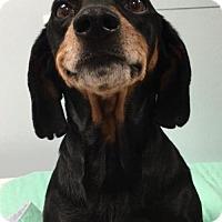 Adopt A Pet :: Carlin - Weston, FL