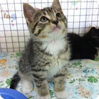Adopt A Pet :: Sunoco - Trevose, PA