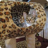Adopt A Pet :: Sofia - Speonk, NY