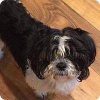 Adopt A Pet :: LingTseah - Homer Glen, IL