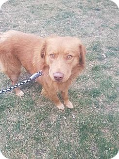 Retriever (Unknown Type) Mix Dog for adoption in Duchess, Alberta - Timber