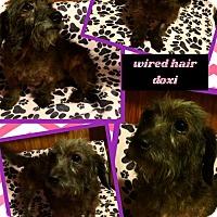 Adopt A Pet :: BellaMia - Bogalusa, LA