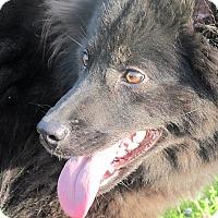 Adopt A Pet :: Aurora - Germantown, MD