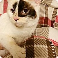 Adopt A Pet :: Katrina - Newport, KY