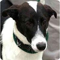 Adopt A Pet :: Price - Alexandria, VA