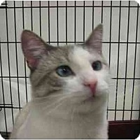 Adopt A Pet :: Tommy Thumbs - Jenkintown, PA