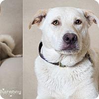 Adopt A Pet :: Aspen & Tahoe - Phoenix, AZ