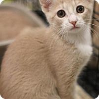Adopt A Pet :: Chex - Sacramento, CA