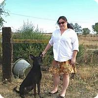 Adopt A Pet :: Bruno - Sacramento, CA