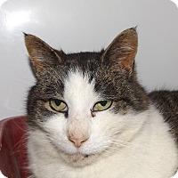Adopt A Pet :: Kentucky - Orleans, VT