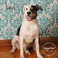 Adopt A Pet :: Levi - Topeka, KS