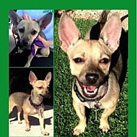 Adopt A Pet :: Babybel - Scottsdale, AZ