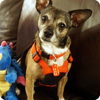 Adopt A Pet :: Misha - Toronto, ON
