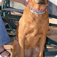 Adopt A Pet :: Annie - Austin, TX