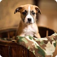Adopt A Pet :: Evander - New Milford, CT