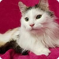 Adopt A Pet :: Clara - Hornell, NY