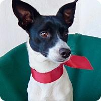 Adopt A Pet :: Charlie - Irvine, CA