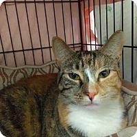 Adopt A Pet :: Rachel - Acushnet, MA