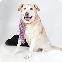 Adopt A Pet :: ROXIE - Sacramento, CA